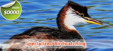 Specialized Birdwatching