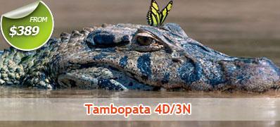 Tambopata 4 Days 3 Nights