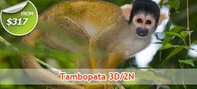 Tambopata 3 Days 2 Nights